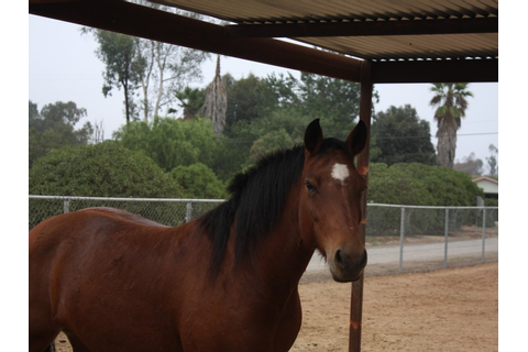 Horse Games: Games You Can Play on Horseback - Poway, CA Patch