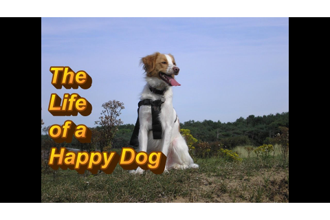The Life of a Happy Dog - YouTube
