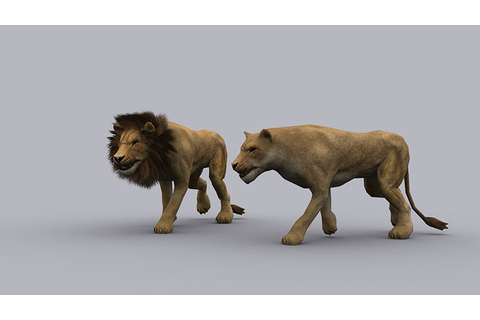 3D asset LION GAME READY ANIMATED MODEL | CGTrader