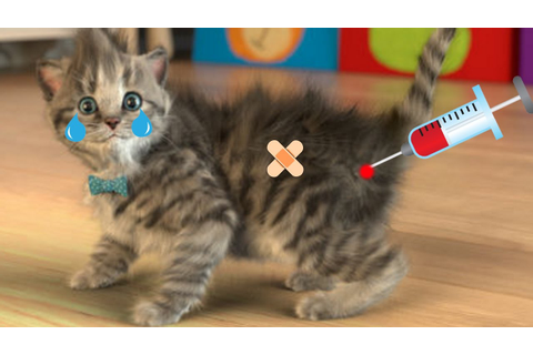 Pet Care - Little Kitten Play Fun Cat Games for Baby ...
