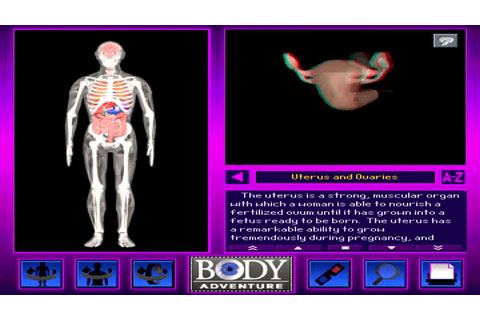Uterus and Ovaries (HD) from 3-D Body Adventure MS-DOS ...