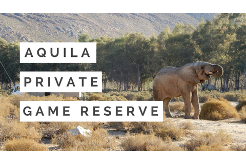 Aquila Safari Private Game Reserve - YouTube