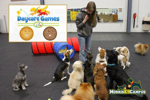 A Dog's Life: The Dog Gurus' Daycare Games