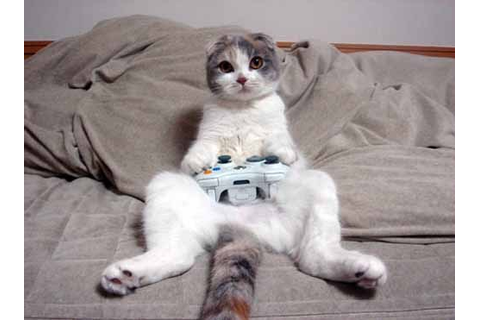 Funny Pictures of Cat and Technology | Amazing Creatures
