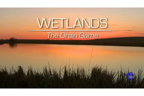 Wetlands: The Drain Game - YouTube