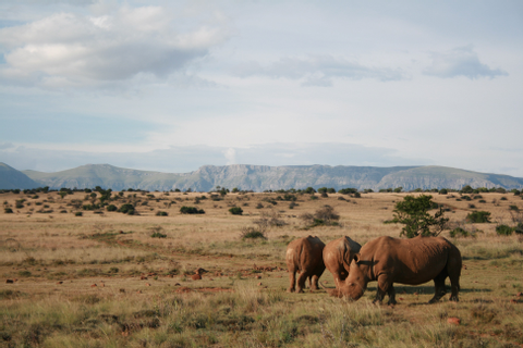 African Safari Destinations: Luxury Bespoke Travel
