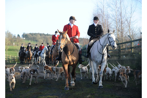 No wonder fox hunting is still prevalent – the ban is ...