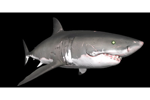Shark Species | Depth Wiki | FANDOM powered by Wikia