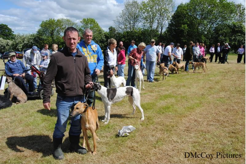 Moira Game Fair 30 May 10... - Lurchers - DogForum.co.uk