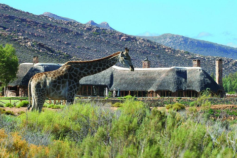 Aquila Private Game Reserve, Touwsrivier – Updated 2019 Prices